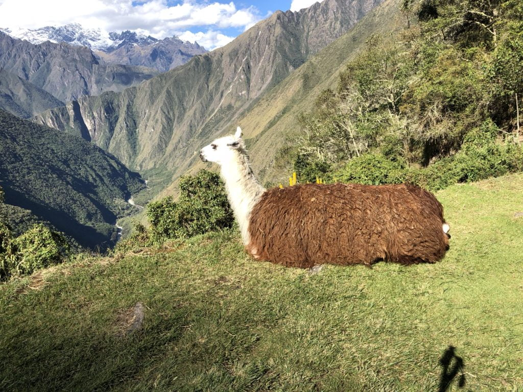 inca trail marathon race report