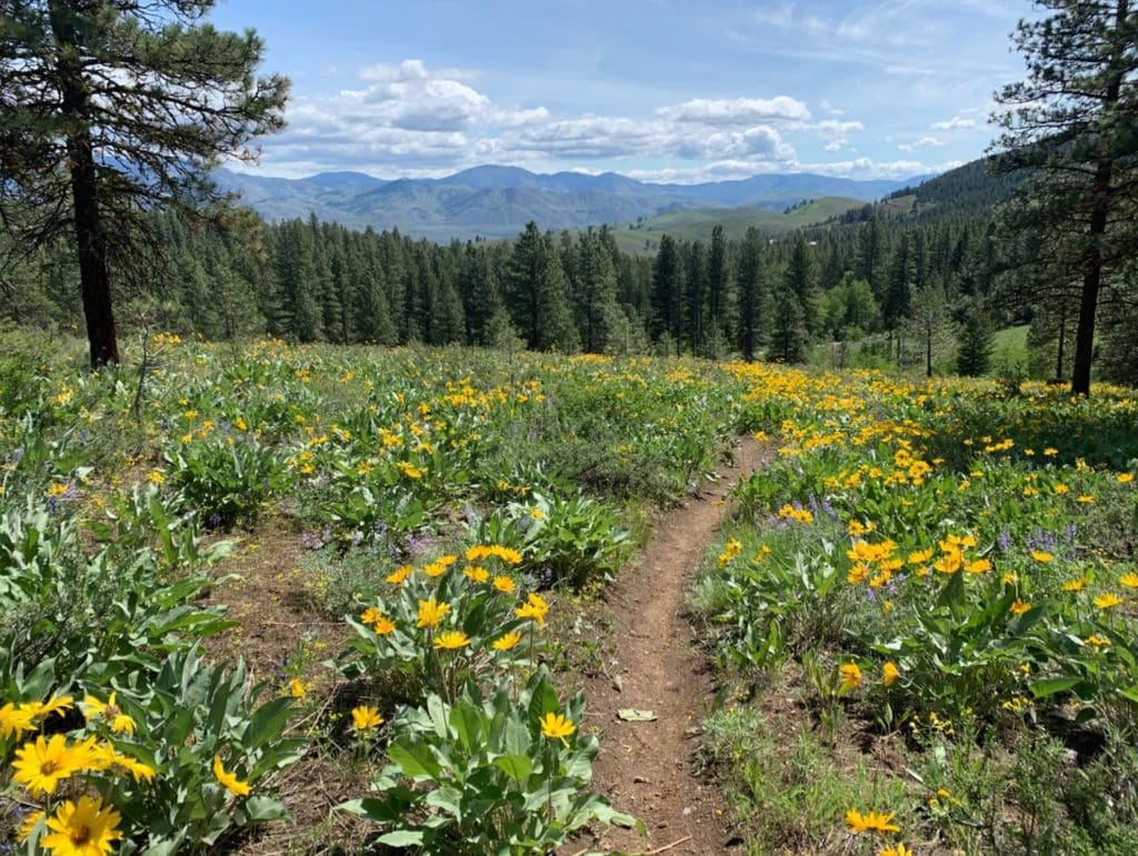 sun mountain 50k race report
