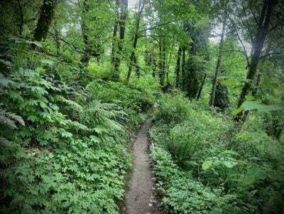 coal creek trail seattle